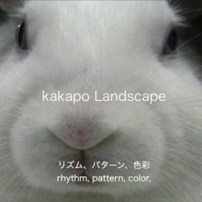 kakapo Landscape icon